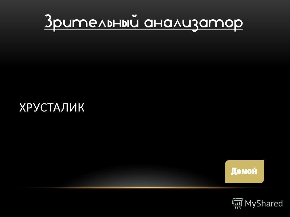 ХРУСТАЛИК Зрительный анализатор Домой