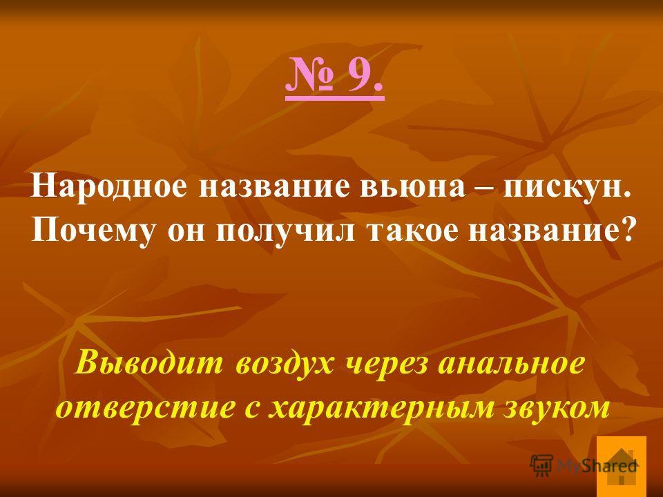 9. Народное название вьюна – пискун. Почему он получил такое название? Выводит воздух через анальное отверстие с характерным звуком
