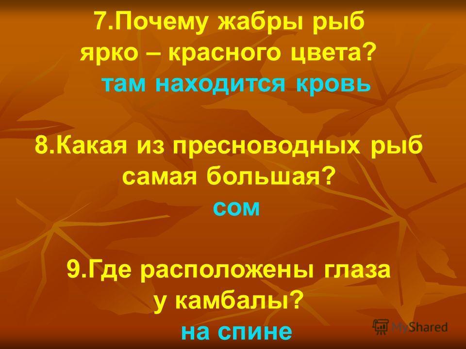 7.Почему жабры рыб ярко – красного цвета? там находится кровь 8.Какая из пресноводных рыб самая большая? сом 9.Где расположены глаза у камбалы? на спине