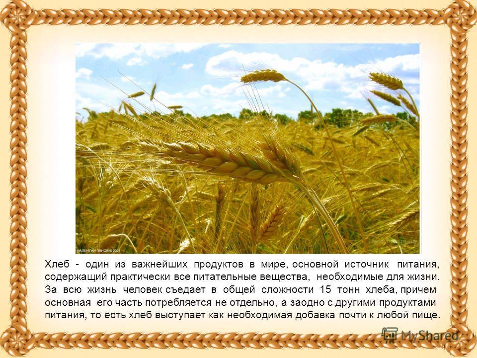 Хлеб - один из важнейших продуктов в мире, основной источник питания, содержащий практически все питательные вещества, необходимые для жизни. За всю жизнь человек съедает в общей сложности 15 тонн хлеба, причем основная его часть потребляется не отде