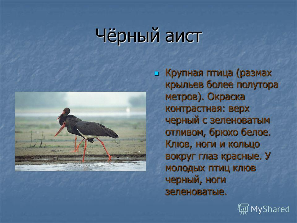 Кабарга Длина тела до 1 м, хвоста 46 см, высота в холке до 70 см; масса 11 18 кг. Задние ноги непропорционально длинные, поэтому у стоящей кабарги крестец на 510 см выше холки. Хвост короткий. Длина тела до 1 м, хвоста 46 см, высота в холке до 70 см;