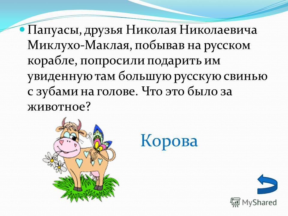 Папуасы, друзья Николая Николаевича Миклухо-Маклая, побывав на русском корабле, попросили подарить им увиденную там большую русскую свинью с зубами на голове. Что это было за животное? Корова