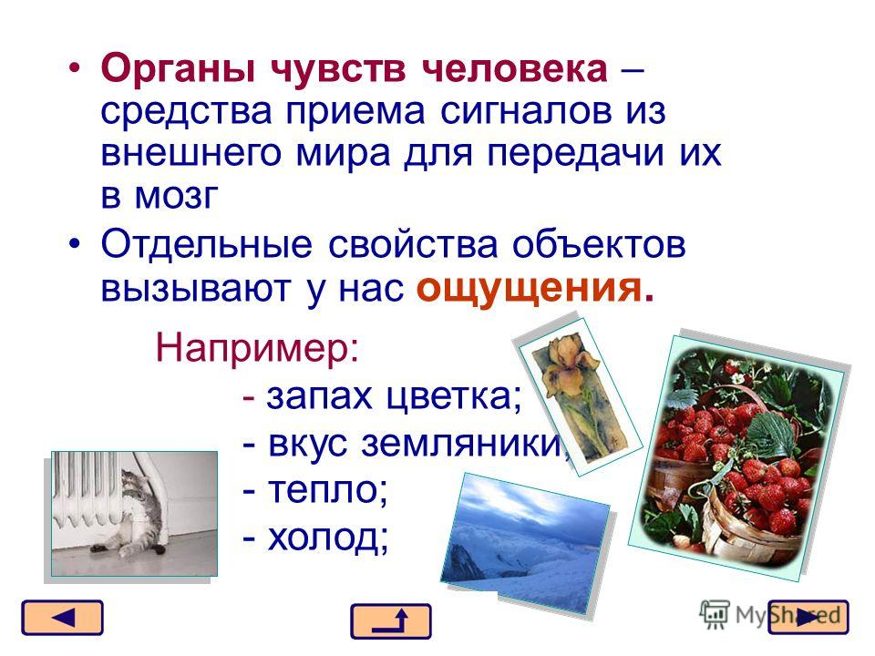 Москва, 2006 г.4 Органы чувств человека – средства приема сигналов из внешнего мира для передачи их в мозг Отдельные свойства объектов вызывают у нас ощущения. Например: - запах цветка; - вкус земляники; - тепло; - холод;