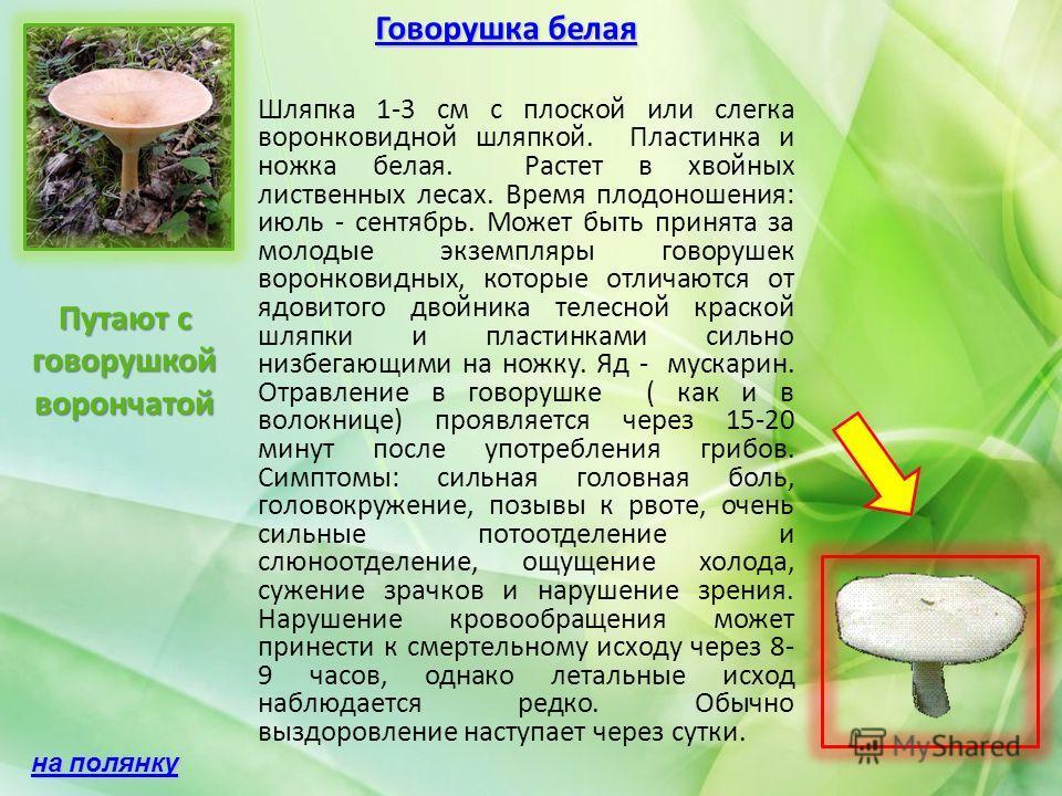 Говорушка белая Говорушка белая Шляпка 1-3 см с плоской или слегка воронковидной шляпкой. Пластинка и ножка белая. Растет в хвойных лиственных лесах. Время плодоношения: июль - сентябрь. Может быть принята за молодые экземпляры говорушек воронковидны