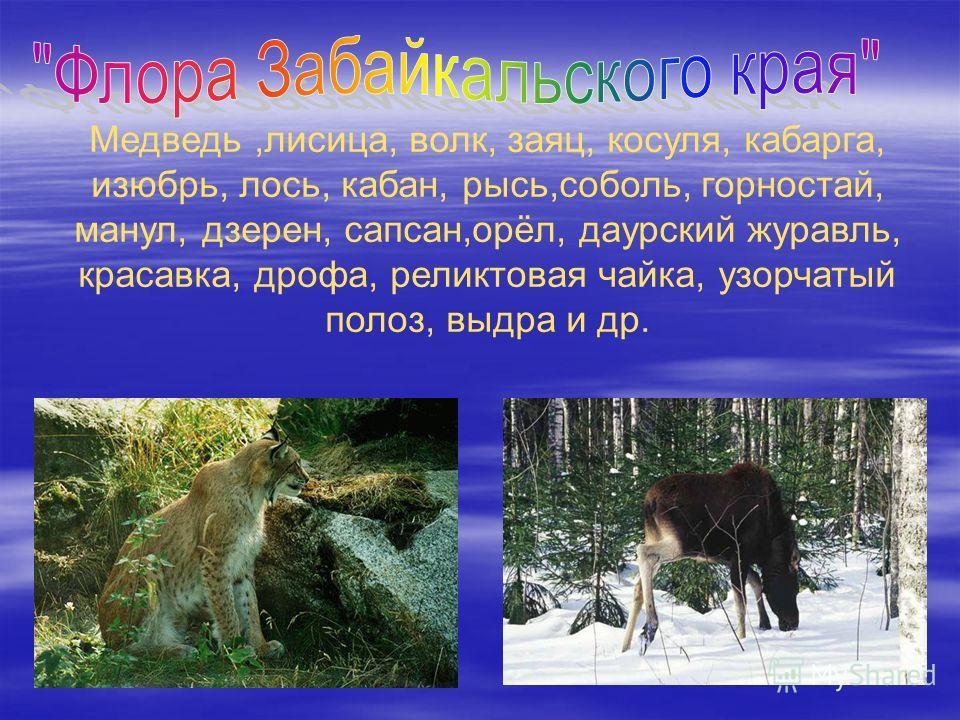 Медведь,лисица, волк, заяц, косуля, кабарга, изюбрь, лось, кабан, рысь,соболь, горностай, манул, дзерен, сапсан,орёл, даурский журавль, красавка, дрофа, реликтовая чайка, узорчатый полоз, выдра и др.