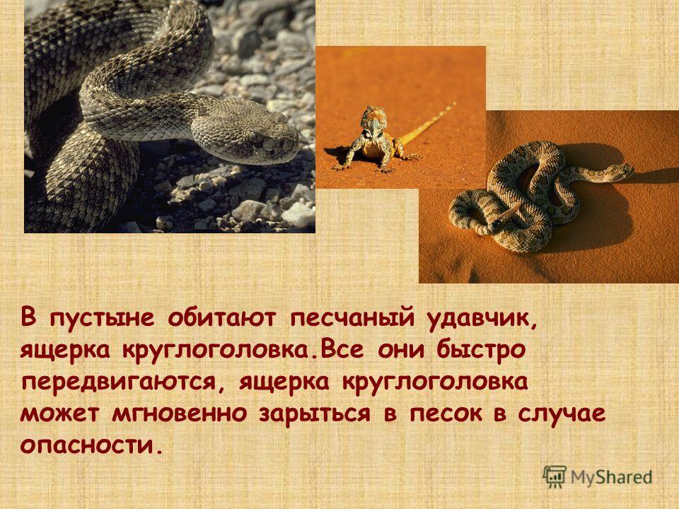 В пустыне обитают песчаный удавчик, ящерка круглоголовка.Все они быстро передвигаются, ящерка круглоголовка может мгновенно зарыться в песок в случае опасности.