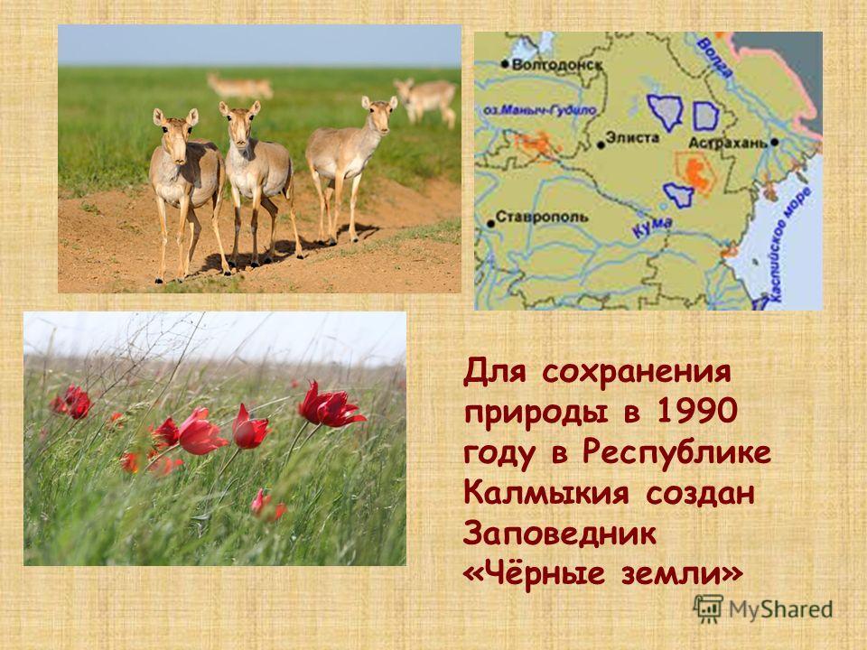 Для сохранения природы в 1990 году в Республике Калмыкия создан Заповедник «Чёрные земли»