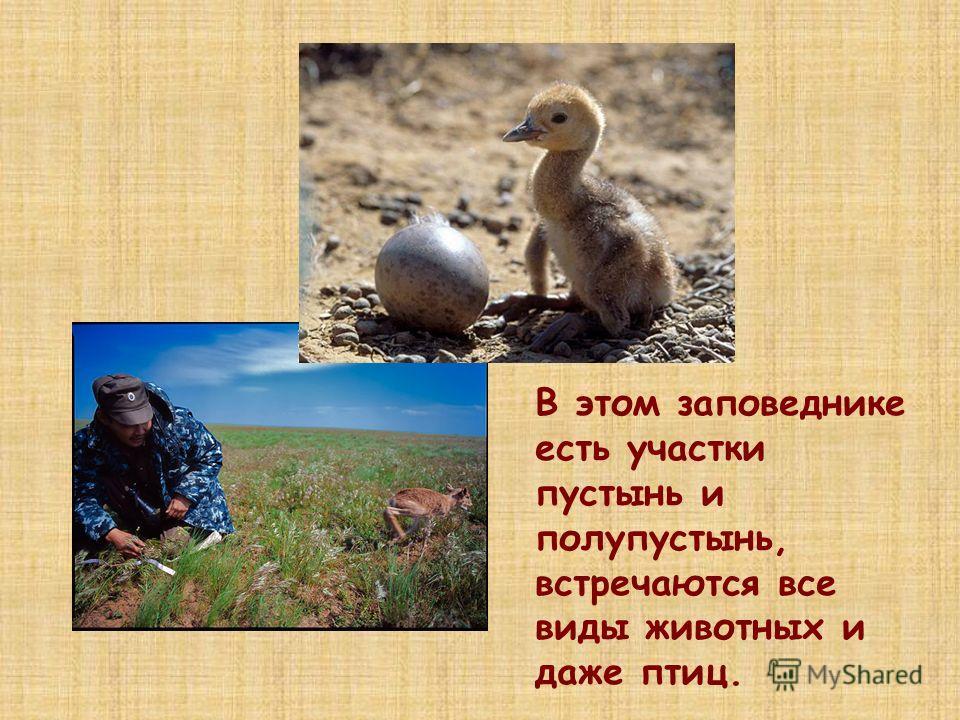 В этом заповеднике есть участки пустынь и полупустынь, встречаются все виды животных и даже птиц.