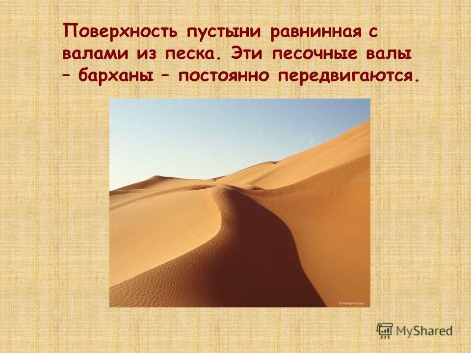 Поверхность пустыни равнинная с валами из песка. Эти песочные валы – барханы – постоянно передвигаются.