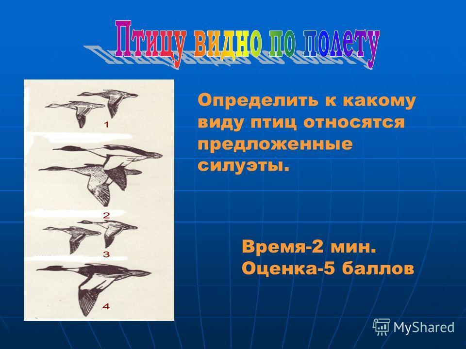 Определить к какому виду птиц относятся предложенные силуэты. Время-2 мин. Оценка-5 баллов