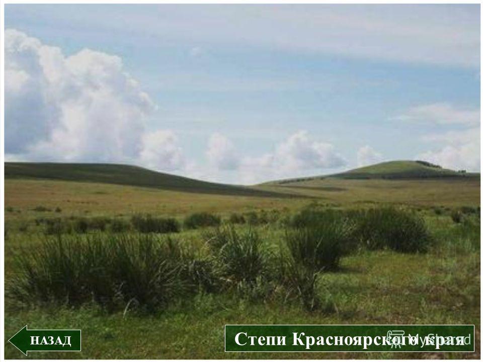 НАЗАД Степи Красноярского края