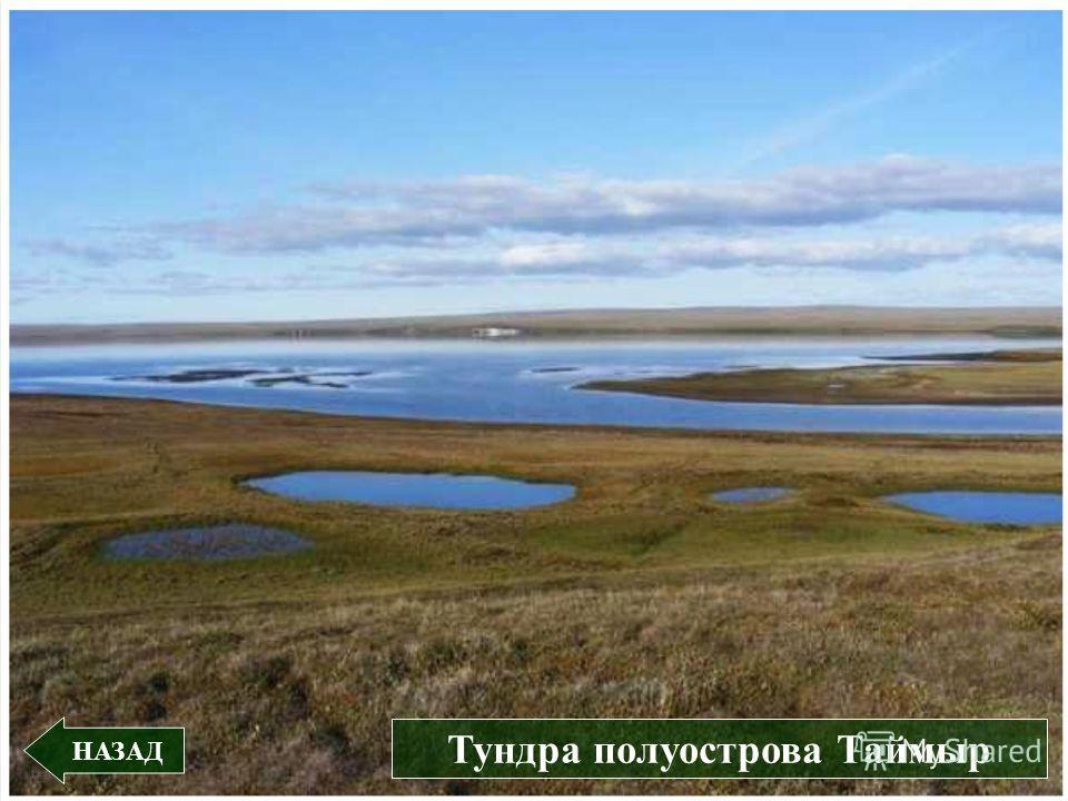 НАЗАД Тундра полуострова Таймыр