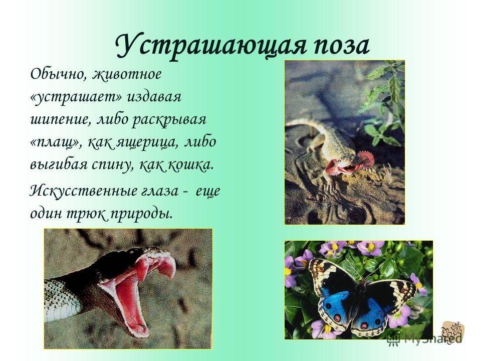 Устрашающая поза Обычно, животное «устрашает» издавая шипение, либо раскрывая «плащ», как ящерица, либо выгибая спину, как кошка. Искусственные глаза - еще один трюк природы.