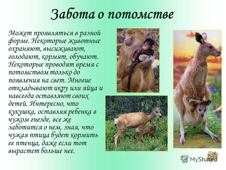 Забота о потомстве Может проявляться в разной форме. Некоторые животные охраняют, высиживают, голодают, кормят, обучают. Некоторые проводят время с потомством только до появления на свет. Многие откладывают икру или яйца и навсегда оставляют своих де