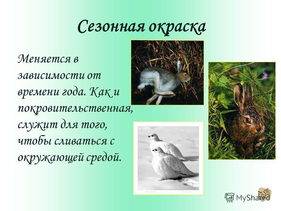 Сезонная окраска Меняется в зависимости от времени года. Как и покровительственная, служит для того, чтобы сливаться с окружающей средой.