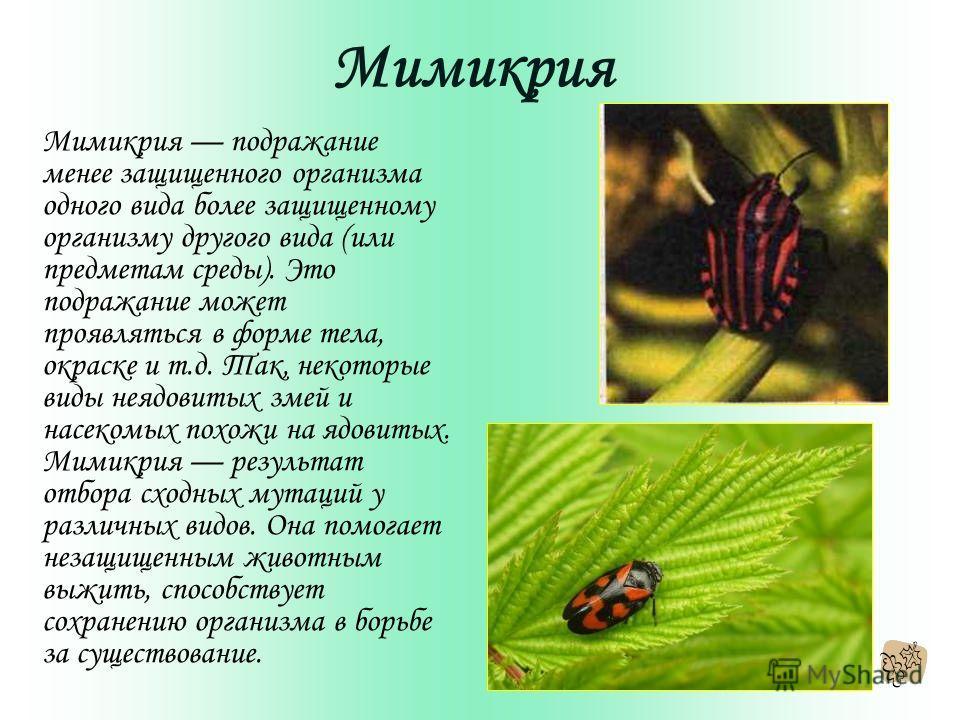 Мимикрия Мимикрия подражание менее защищенного организма одного вида более защищенному организму другого вида (или предметам среды). Это подражание может проявляться в форме тела, окраске и т.д. Так, некоторые виды неядовитых змей и насекомых похожи