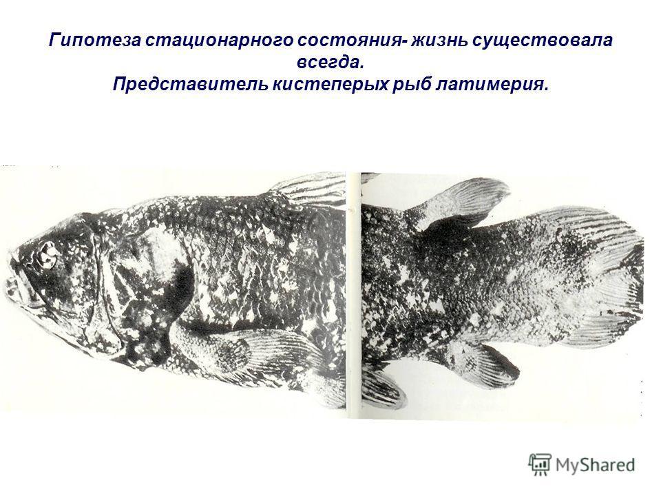 Гипотеза стационарного состояния- жизнь существовала всегда. Представитель кистеперых рыб латимерия.