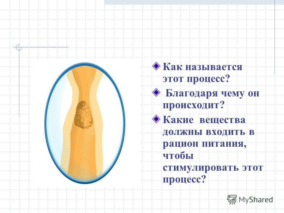 Кишечник Назовите отделы кишечника.