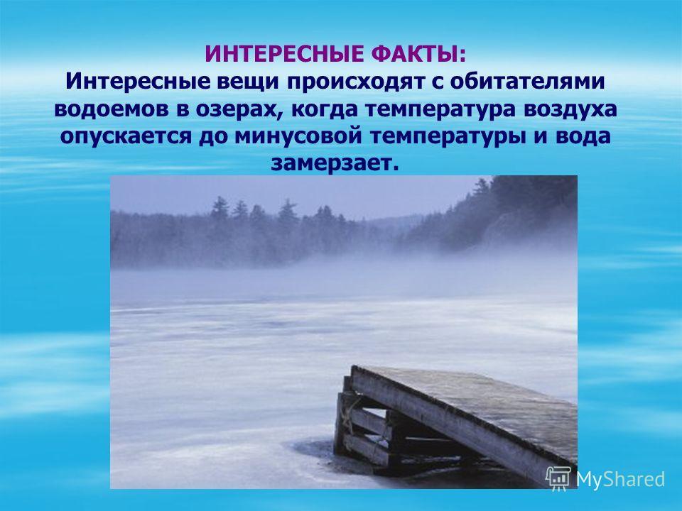 ИНТЕРЕСНЫЕ ФАКТЫ: Интересные вещи происходят с обитателями водоемов в озерах, когда температура воздуха опускается до минусовой температуры и вода замерзает.