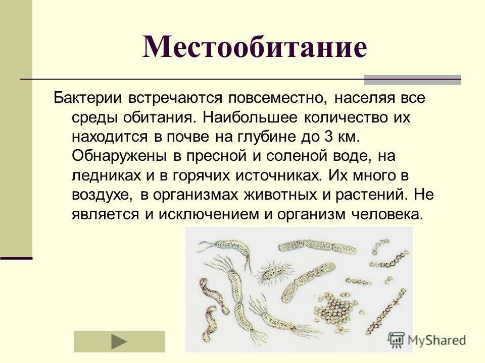 Местообитание Бактерии встречаются повсеместно, населяя все среды обитания. Наибольшее количество их находится в почве на глубине до 3 км. Обнаружены в пресной и соленой воде, на ледниках и в горячих источниках. Их много в воздухе, в организмах живот
