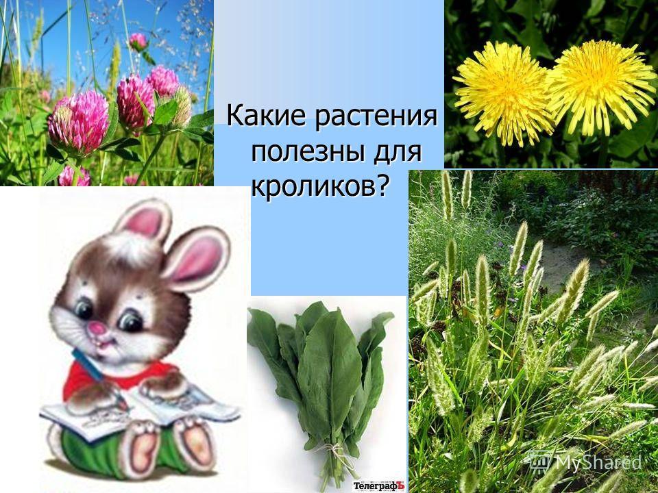 Какие растения полезны для кроликов?