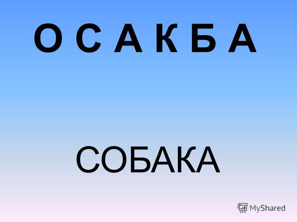О С А К Б А СОБАКА