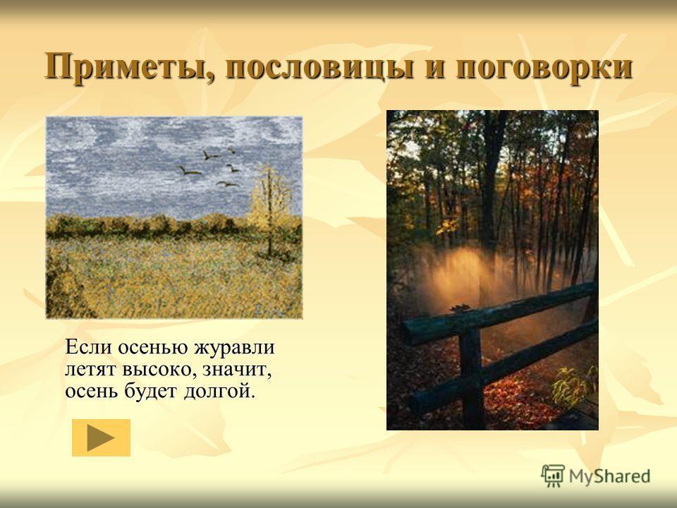 Приметы, пословицы и поговорки Если осенью журавли летят высоко, значит, осень будет долгой.