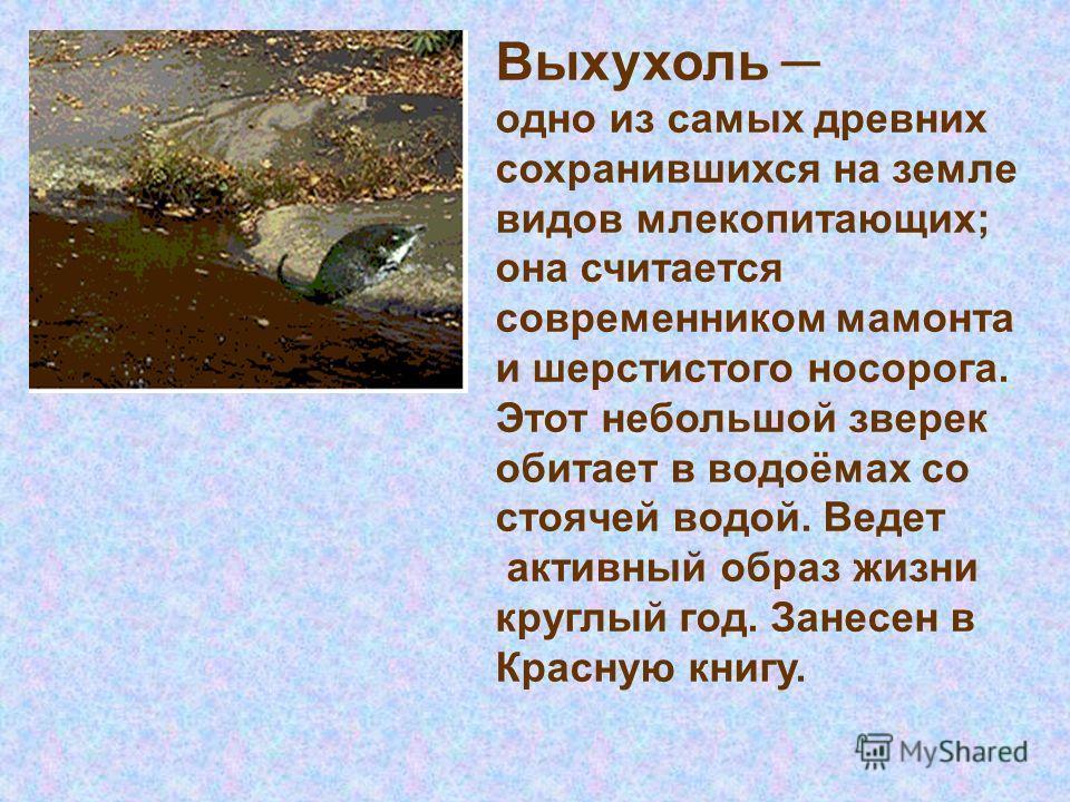 Выхухоль одно из самых древних сохранившихся на земле видов млекопитающих; она считается современником мамонта и шерстистого носорога. Этот небольшой зверек обитает в водоёмах со стоячей водой. Ведет активный образ жизни круглый год. Занесен в Красну