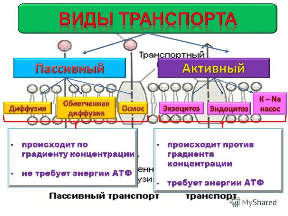 -происходит по градиенту концентрации -не требует энергии АТФ -происходит против градиента концентрации -требует энергии АТФ