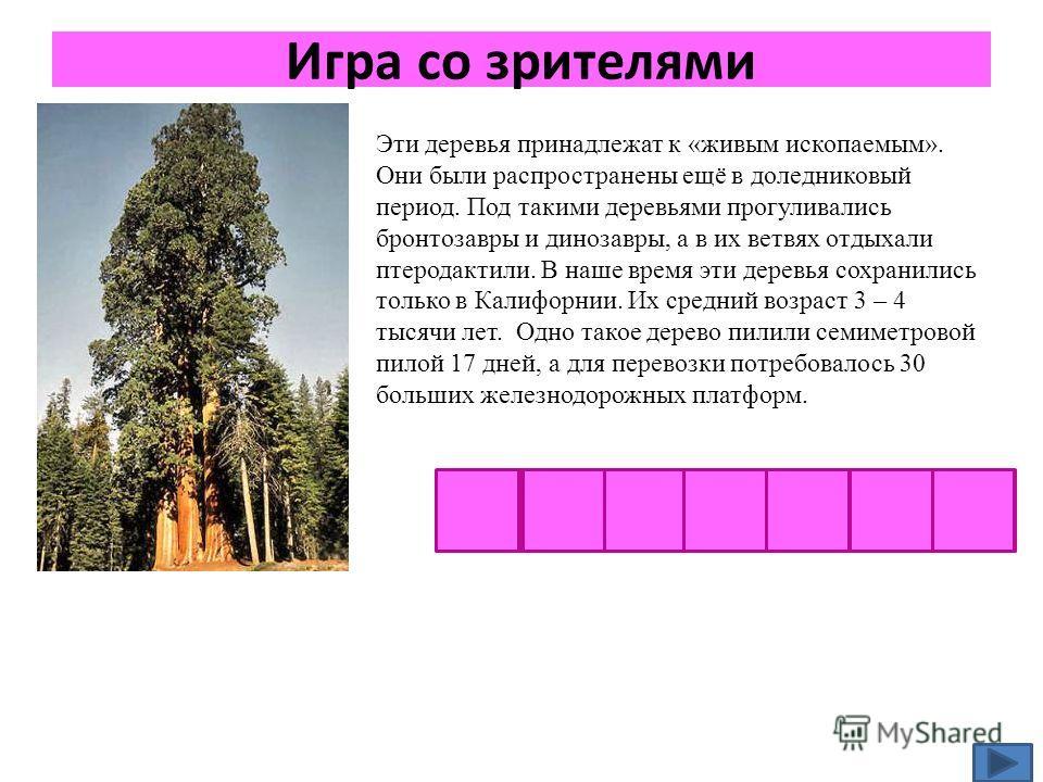 Игра со зрителями Эти деревья принадлежат к «живым ископаемым». Они были распространены ещё в доледниковый период. Под такими деревьями прогуливались бронтозавры и динозавры, а в их ветвях отдыхали птеродактили. В наше время эти деревья сохранились т