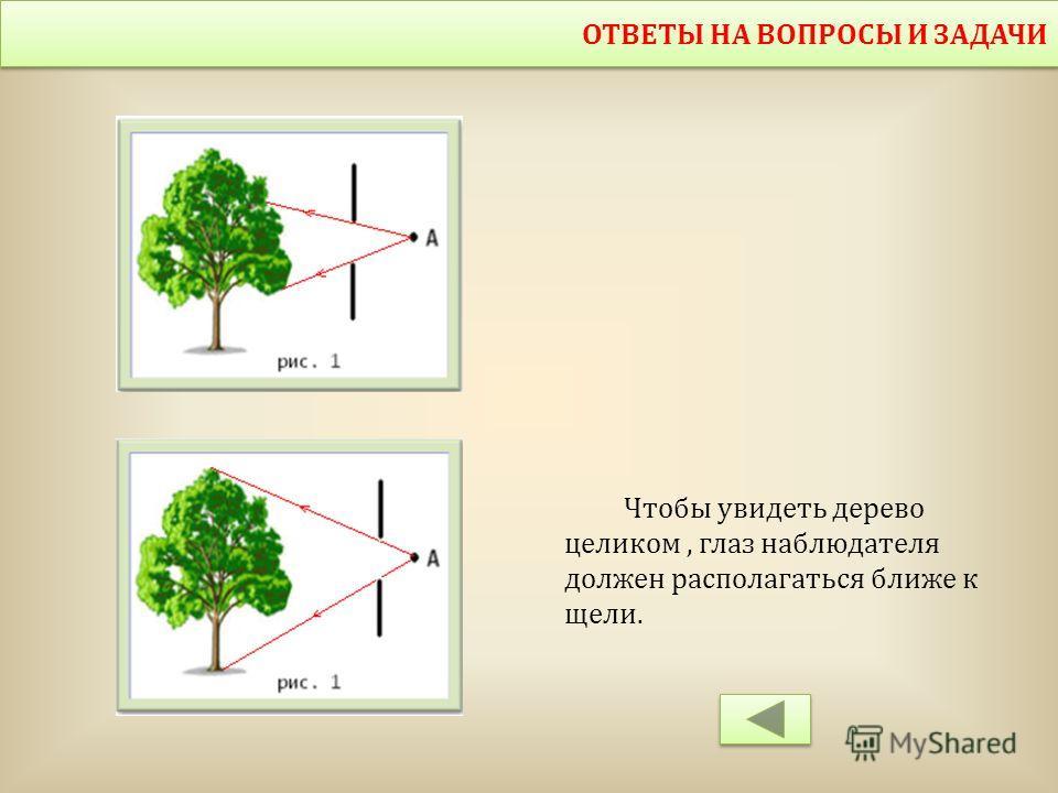ОТВЕТЫ НА ВОПРОСЫ И ЗАДАЧИ Чтобы увидеть дерево целиком, глаз наблюдателя должен располагаться ближе к щели.