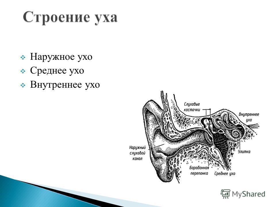 Ухо человека воспринимает звуковые волны длиной примерно от 20,625 м до 1,65 см, что соответствует 16 20 000 Гц (колебаний в секунду).