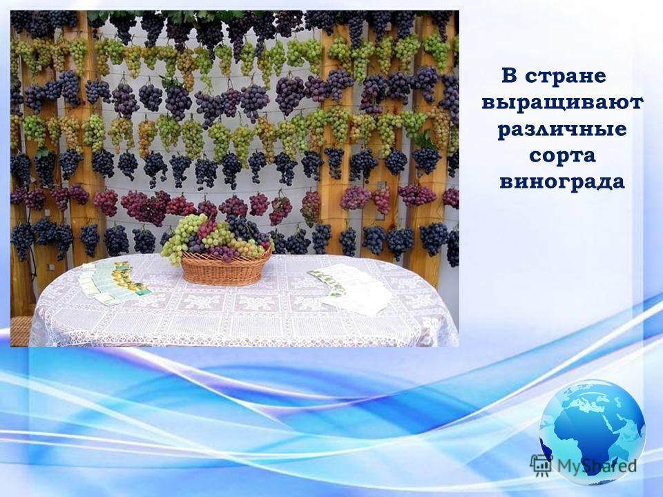 В стране выращивают различные сорта винограда
