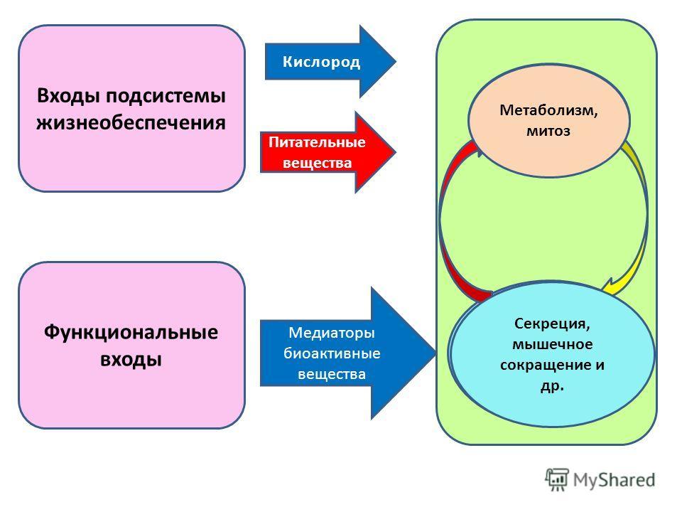 Входы подсистемы жизнеобеспечения Функциональные входы Кислород Питательные вещества Медиаторы биоактивные вещества Подсистема жизнеобеспе чения Подсистема, обеспечивающая выполнение специфических функций Метаболизм, митоз Секреция, мышечное сокращен