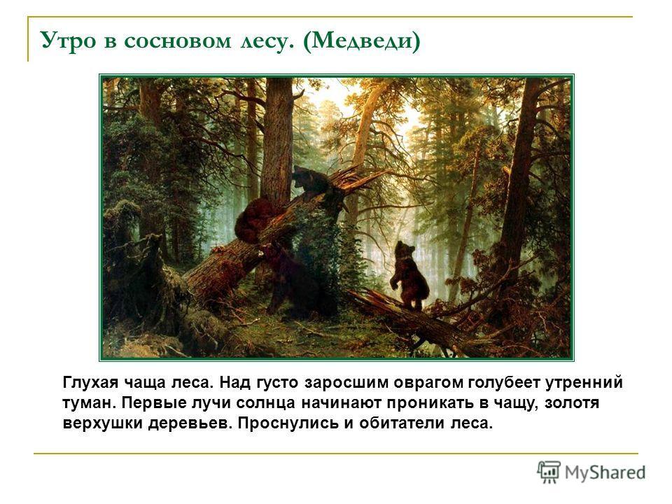 Утро в сосновом лесу. (Медведи) Глухая чаща леса. Над густо заросшим оврагом голубеет утренний туман. Первые лучи солнца начинают проникать в чащу, золотя верхушки деревьев. Проснулись и обитатели леса.
