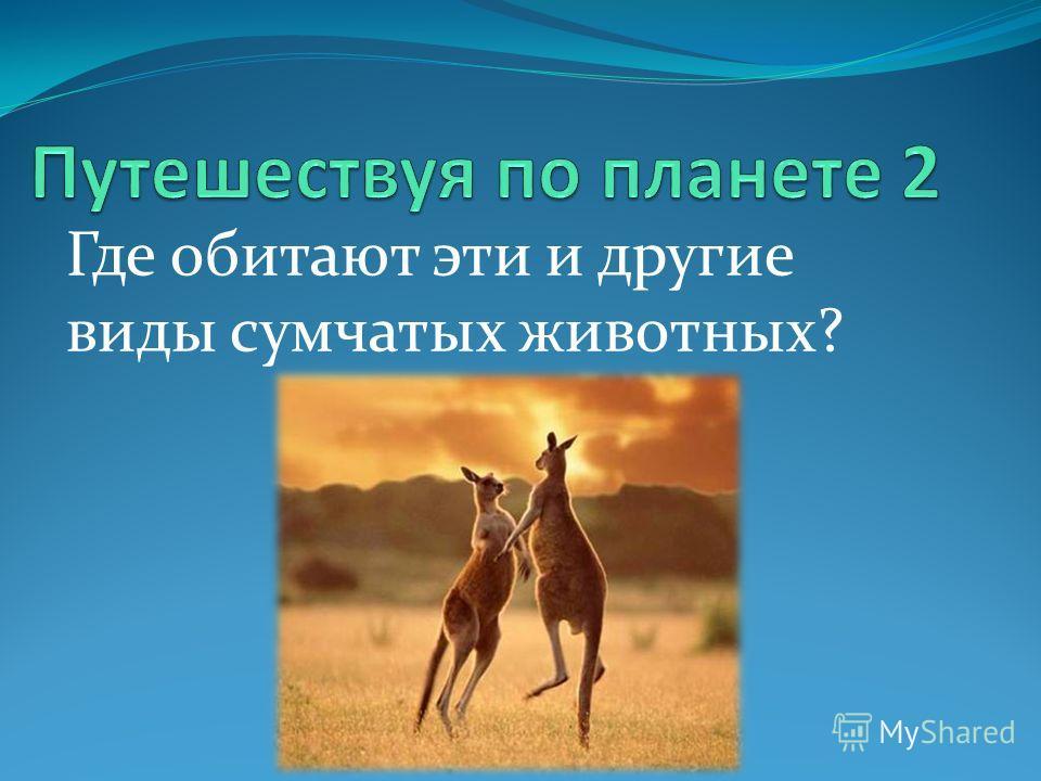 Где обитают эти и другие виды сумчатых животных?