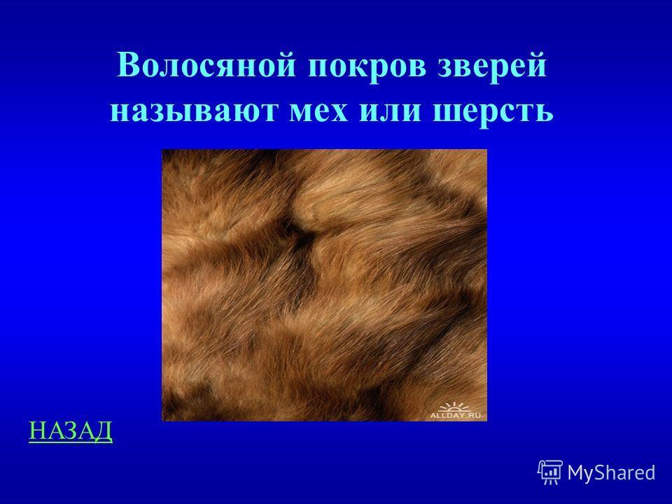 Волосяной покров 200 Как еще называется волосяной покров зверей?