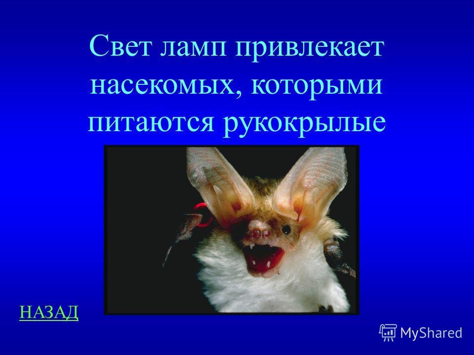 Занимательные вопросы 400 Летучие мыши не реагируют на свет, однако часто залетают в освещенные помещения. Объясните причину такого поведения.