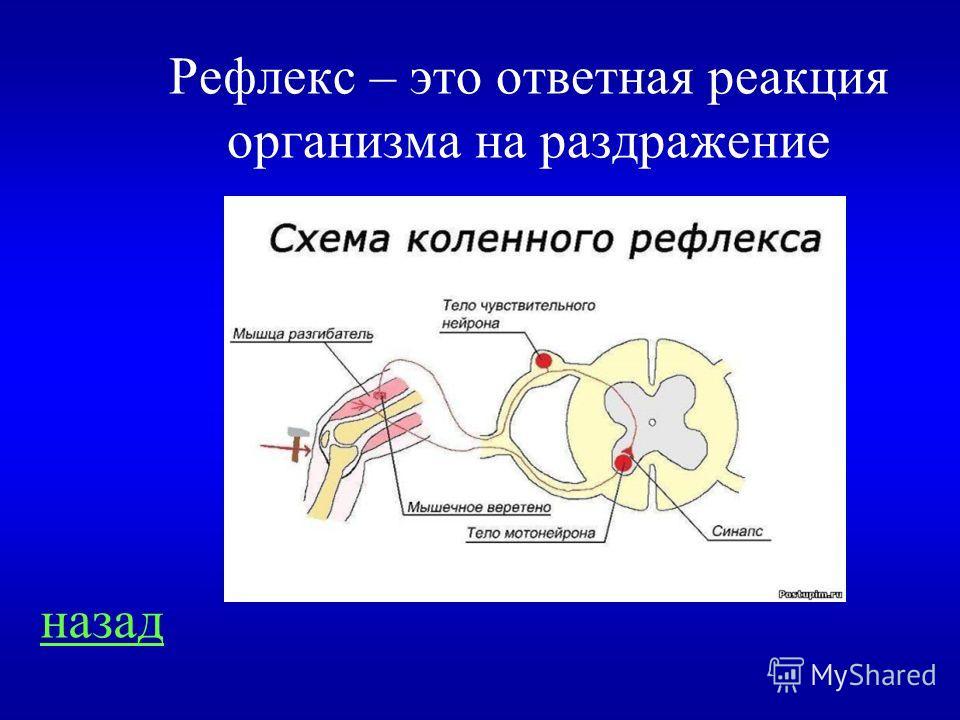 Нервная система 200 Что такое рефлекс?
