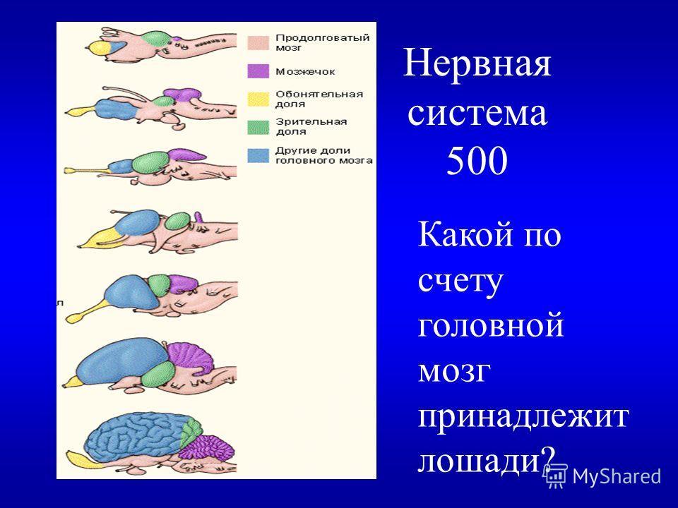 Нервная система 400 Разгадайте ребус назад
