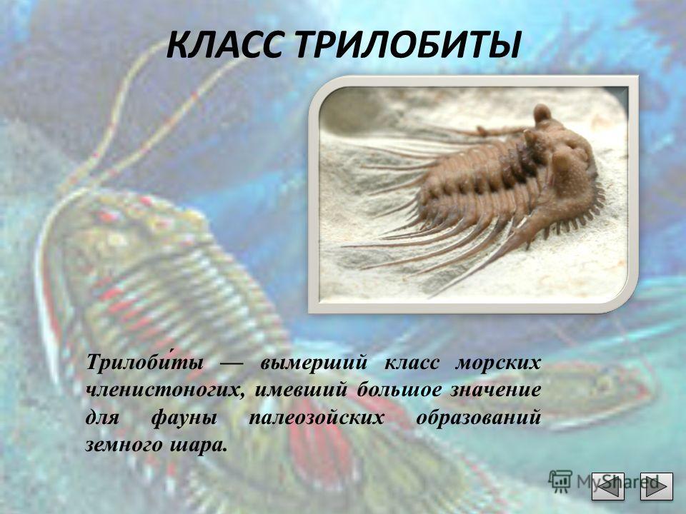 КЛАСС ТРИЛОБИТЫ Трилоби́ты вымерший класс морских членистоногих, имевший большое значение для фауны палеозойских образований земного шара.