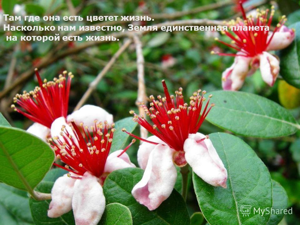 Там где она есть, цветет жизнь. Насколько нам известно, Земля единственная планета на которой есть жизнь Там где она есть цветет жизнь. Насколько нам известно, Земля единственная планета на которой есть жизнь.