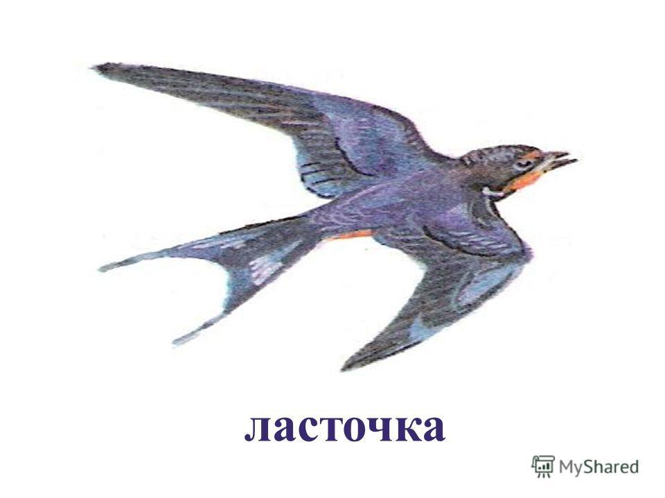 Название какой птицы здесь зашифровано ?