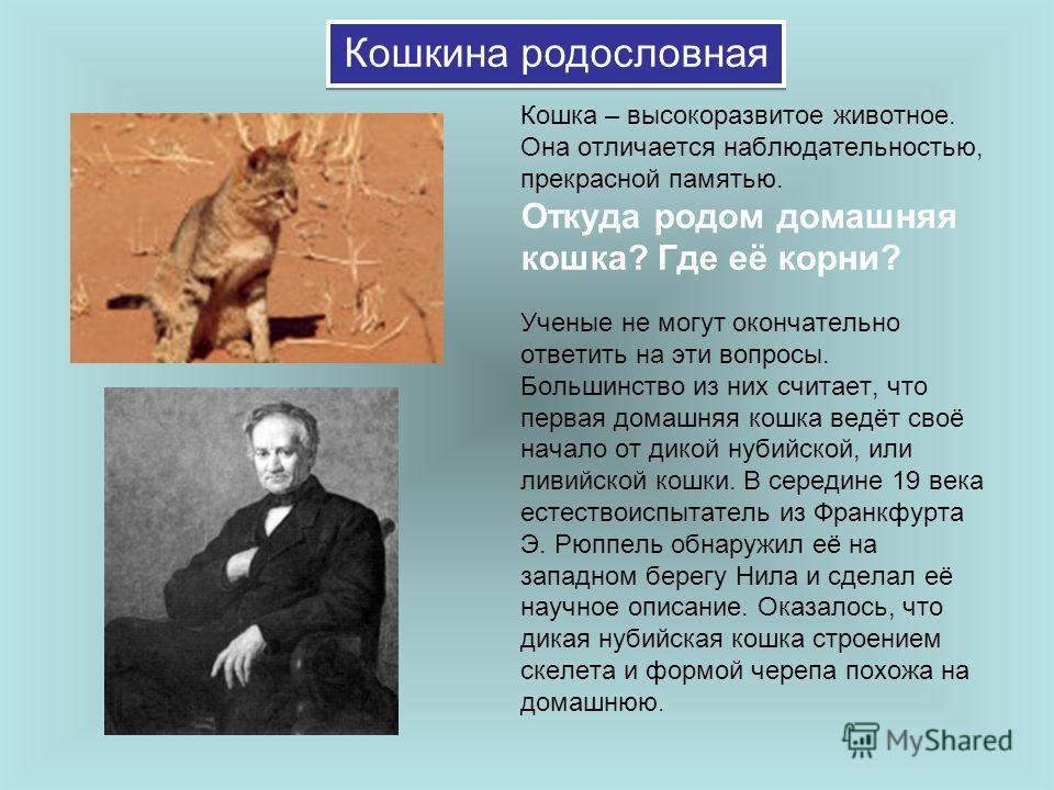 Кошкина родословная Кошка – высокоразвитое животное. Она отличается наблюдательностью, прекрасной памятью. Откуда родом домашняя кошка? Где её корни? Ученые не могут окончательно ответить на эти вопросы. Большинство из них считает, что первая домашня