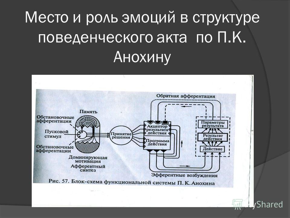 Место и роль эмоций в структуре поведенческого акта по П.К. Анохину
