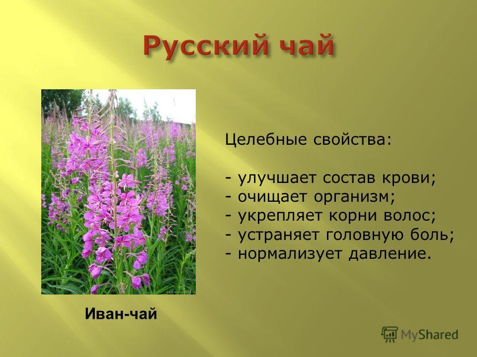 Иван-чай Целебные свойства: - улучшает состав крови; - очищает организм; - укрепляет корни волос; - устраняет головную боль; - нормализует давление.