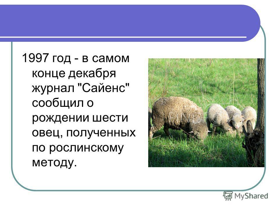 1997 год - в самом конце декабря журнал Сайенс сообщил о рождении шести овец, полученных по рослинскому методу.
