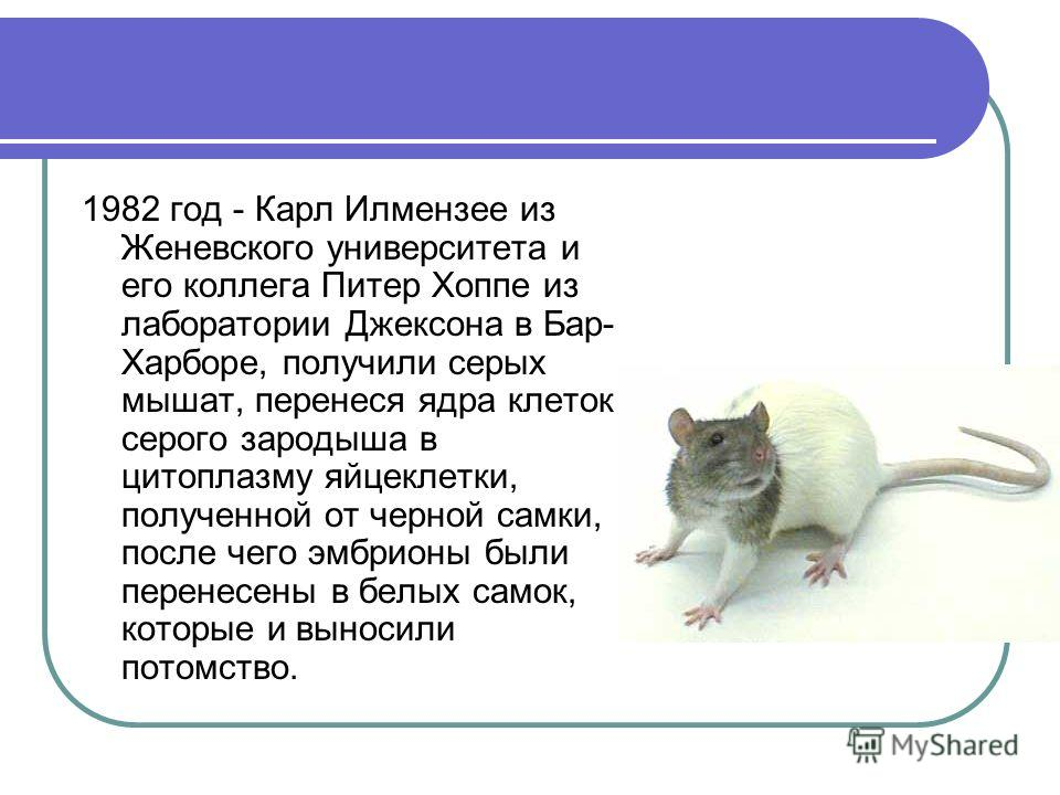 1982 год - Карл Илмензее из Женевского университета и его коллега Питер Хоппе из лаборатории Джексона в Бар- Харборе, получили серых мышат, перенеся ядра клеток серого зародыша в цитоплазму яйцеклетки, полученной от черной самки, после чего эмбрионы