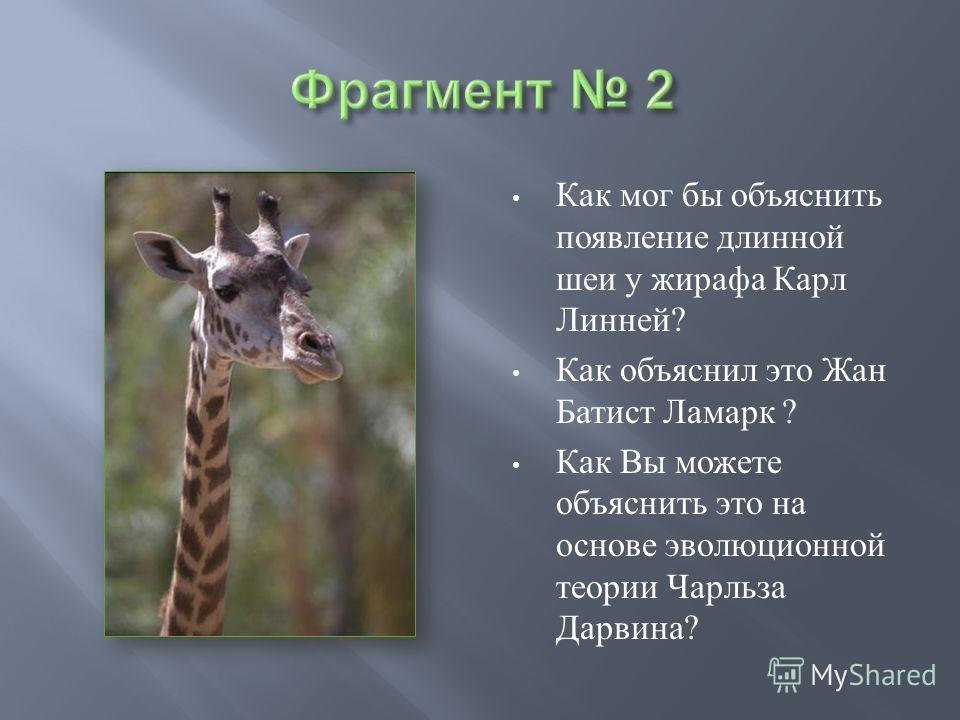 Как мог бы объяснить появление длинной шеи у жирафа Карл Линней ? Как объяснил это Жан Батист Ламарк ? Как Вы можете объяснить это на основе эволюционной теории Чарльза Дарвина ?