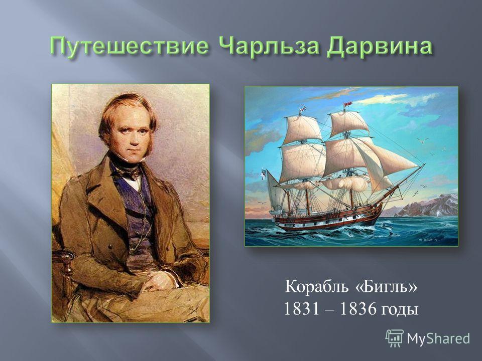 Корабль «Бигль» 1831 – 1836 годы